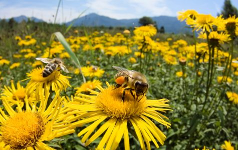 We need to understand the integral role of bees in society