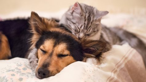 Cats or Dogs? Which pet would you prefer?