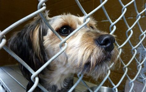 Adopt a pet today! Animal shelters deserve more attention