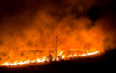 Life threatening fires hit the Amazon Rainforest–will we fiddle while the world burns?