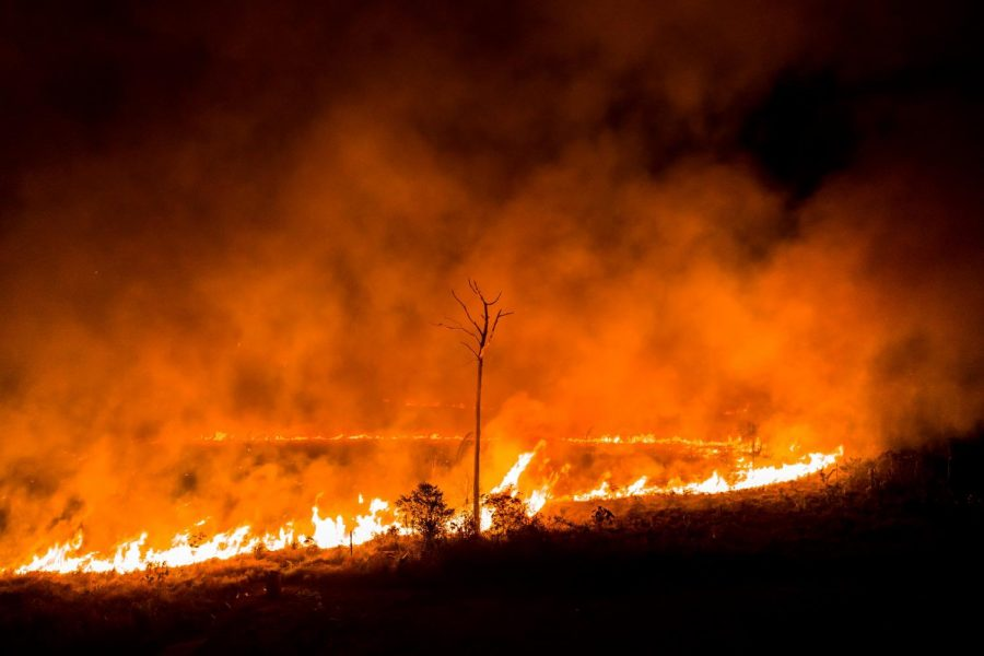 Life threatening fires hit the Amazon Rainforest--will we fiddle while the world burns?